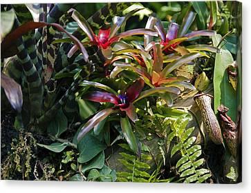 Bromeliad Plant Canvas Print by Dr Keith Wheeler