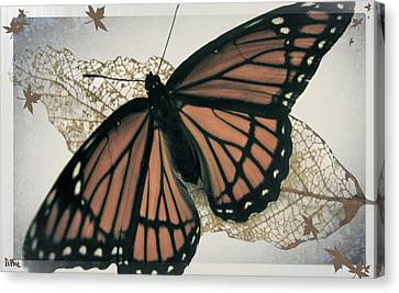 Butterfly Design Collection Canvas Print by Debra     Vatalaro