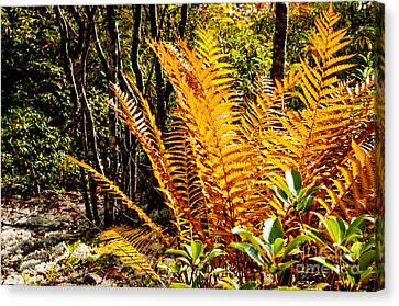 Fall Color Fern Canvas Print by Thomas R Fletcher