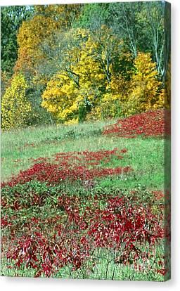 Patoka Lake - Indiana Canvas Print by Jack R Brock