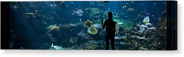 Sea-life Centre, France Canvas Print by Alexis Rosenfeld