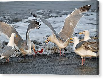 Seagulls Canvas Print by Debra  Miller