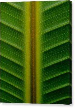 Wild Banana Leaf Canvas Print by Werner Lehmann