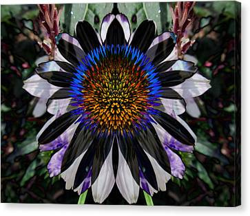 Coneflower Canvas Print by Michele Caporaso