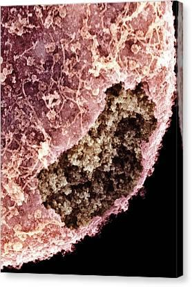 Cell Nucleus, Sem Canvas Print by