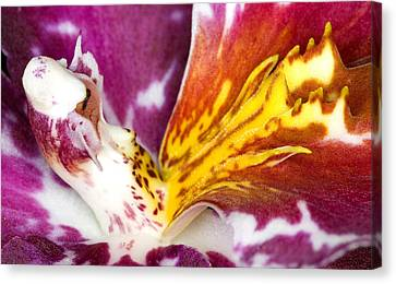 Flowers Canvas Print - Exotic Orchid Flowers Of C Ribet by C Ribet
