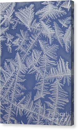 Frost On A Window Canvas Print by Ted Kinsman