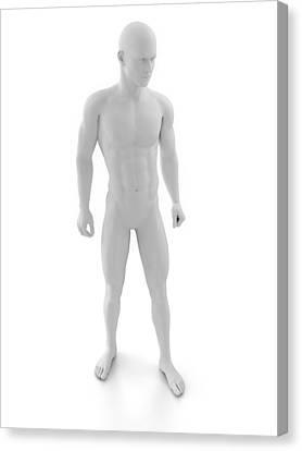Male Anatomy, Artwork Canvas Print