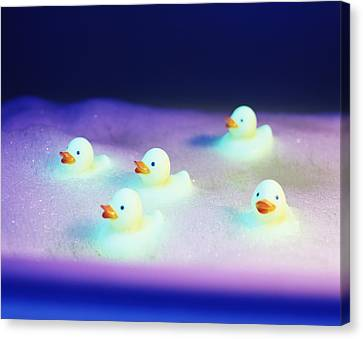 Rubber Ducks Canvas Print by Lawrence Lawry
