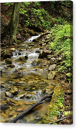 Rushing Mountain Stream Canvas Print by Thomas R Fletcher