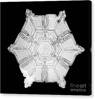 Snowflake Canvas Print by Science Source
