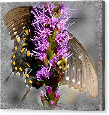 Butterfly Design Collection Canvas Print by Debra     Vatalaro
