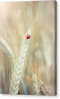 Ladybug On A Spike Canvas Print