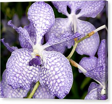 Canvas Print featuring the photograph Orchid Flower Bloom by C Ribet
