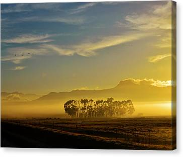 Blue Gum Trees Canvas Print by Werner Lehmann