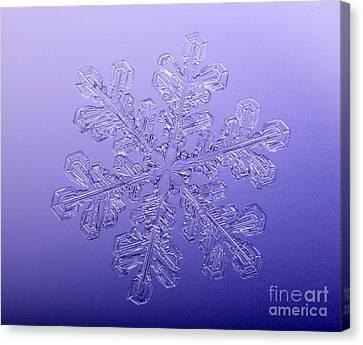 Snowflake Canvas Print by Ted Kinsman