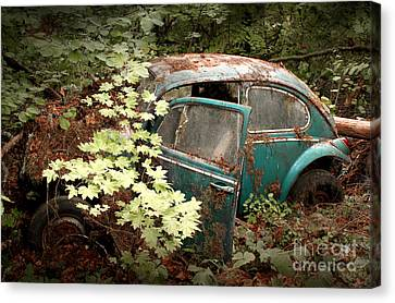 A '65 Bug In The Overgrowth Canvas Print by Michael David Sorensen