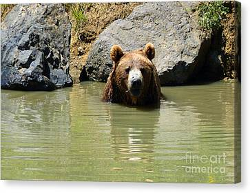 A Bear's Hot Tub Canvas Print by Methune Hively