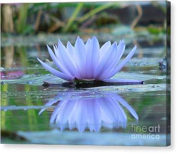 A Beautiful Water Lily Reflection Canvas Print by Chad and Stacey Hall