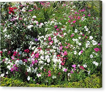 A Bed Of Beautiful Different Color Flowers Canvas Print by Ashish Agarwal
