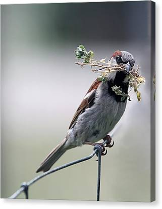 Canvas Print featuring the photograph A Bird And A Twig by Elizabeth Winter