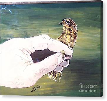 A Bird In Hand Canvas Print by Lucia Grilletto