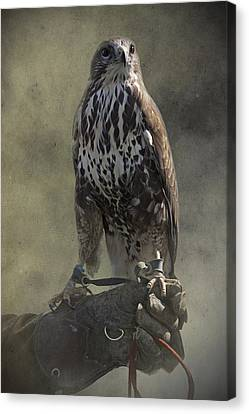 Canvas Print featuring the photograph A Bird In The Hand by Ethiriel  Photography