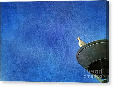 A Birds Eye View Canvas Print by Andee Design