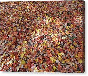 A Blanket Of Fallen Leaves Canvas Print