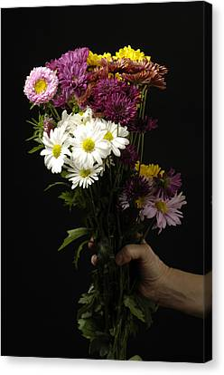 A Bouquet Of Chrysanthemums Canvas Print by Joel Sartore