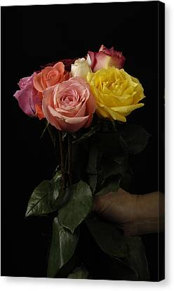 A Bouquet Of Roses Rosaceae Canvas Print by Joel Sartore