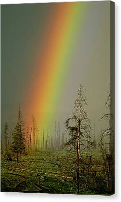 A Brilliantly Colored Rainbow Ends Canvas Print by Norbert Rosing