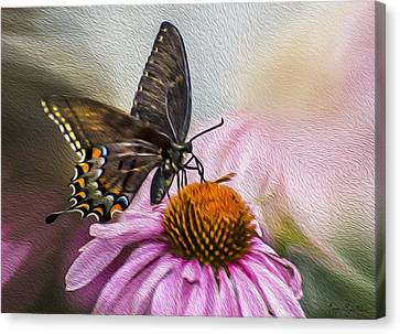 A Butterfly's Magical Moment Canvas Print