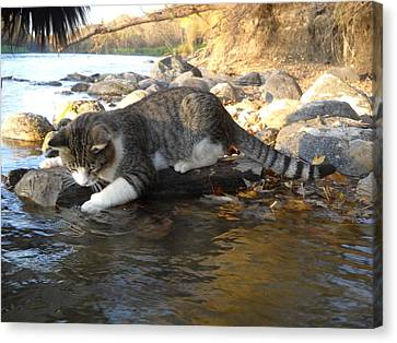A Cat Goes Fishing Canvas Print by Kent Lorentzen