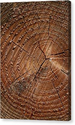 A Close Up Of Tree Rings Canvas Print by Sabine Davis