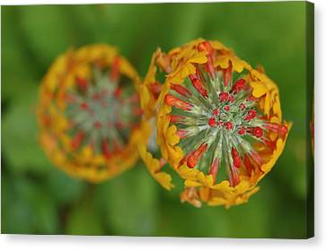 A Close Up View Of Flowering Stalks Canvas Print by Darlyne A. Murawski