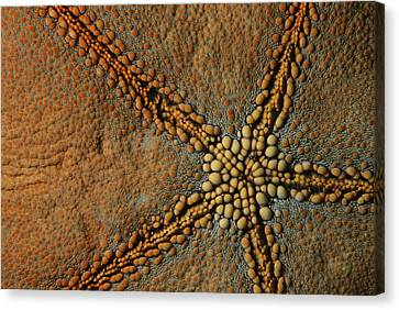 A Close View Of The Skin Of A Cushion Canvas Print by Tim Laman