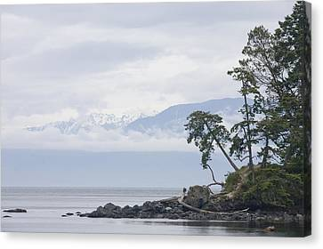 Shoreline Old Men Canvas Print - A Cloudy Spring Day On Vancouver Island by Taylor S. Kennedy