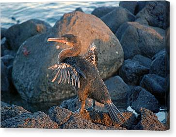 A Cormorant At Sunset Canvas Print