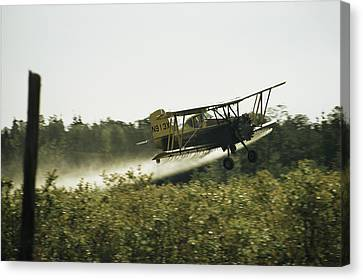 A Crop Dusting Airplane Flys Low Canvas Print by Bill Curtsinger