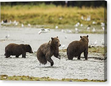 Prints Of Alaska Canvas Print - A Day At The Salmon Stream by Tim Grams