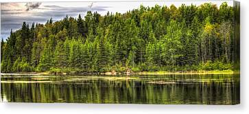 A Day In The Forest Of Maine Canvas Print by Gary Smith