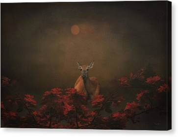 A Deer In The Sunset Canvas Print by Tom York Images