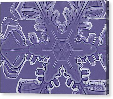 A Dendritic Snowflake Canvas Print by Ted Kinsman