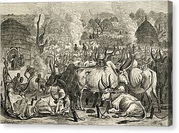 A Dinka Cattle Park, Southern Sudan Canvas Print