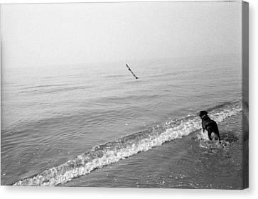 A Dog Fetches A Stick At The Shore Canvas Print by Stephen Alvarez