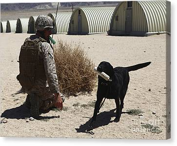 Working Dog Canvas Print - A Dog Handler Calls Over A Black by Stocktrek Images