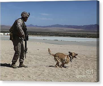 Working Dog Canvas Print - A Dog Handler Conducts Improvised by Stocktrek Images