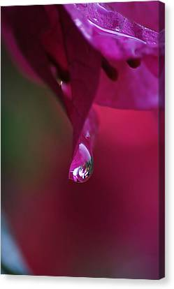 A Drop Of Deep Pink Canvas Print by Louise Mingua
