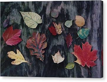 A Fall Of Color Canvas Print by Gerald Strine